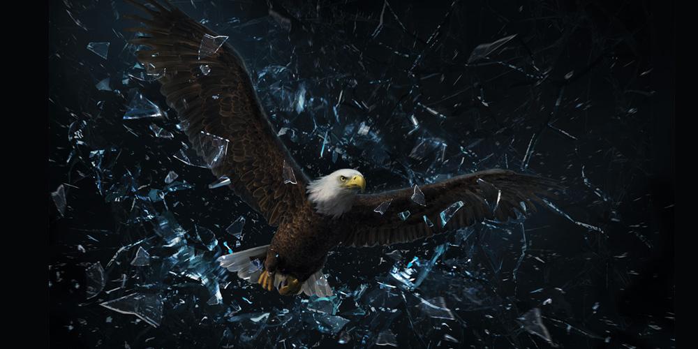 eagle.224